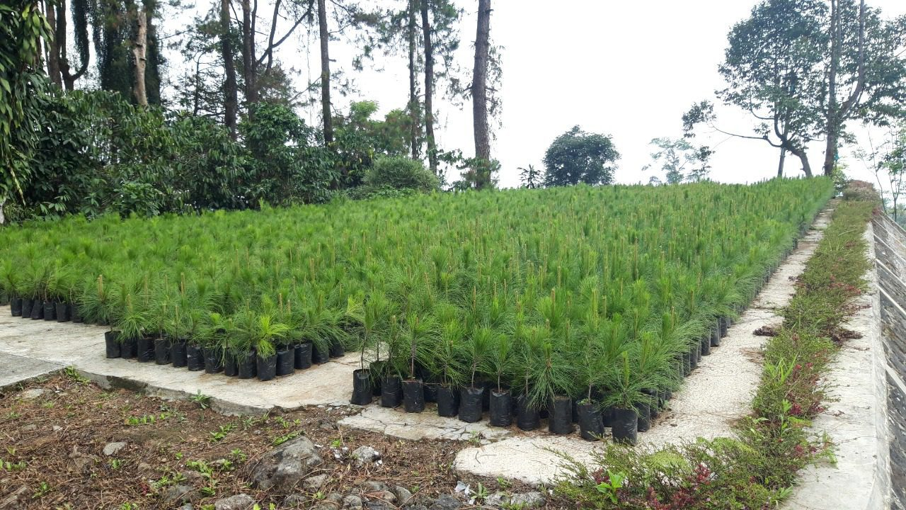 Focus Group Discussion (FGD): Pengembangan Pinus Bocor Getah Perum Perhutani